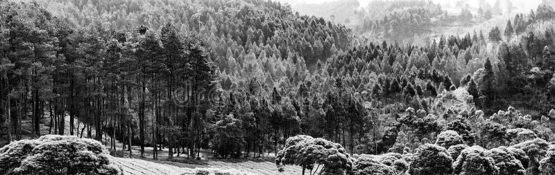 Floresta úmida sobre o monte foto de stock