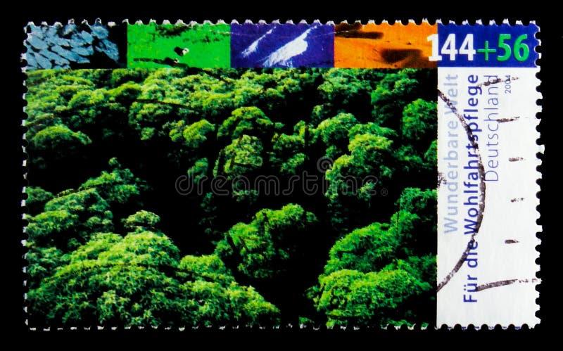 Floresta úmida tropical, bem-estar: Mundo maravilhoso - serie dos climas, cerca de 2004 imagens de stock royalty free