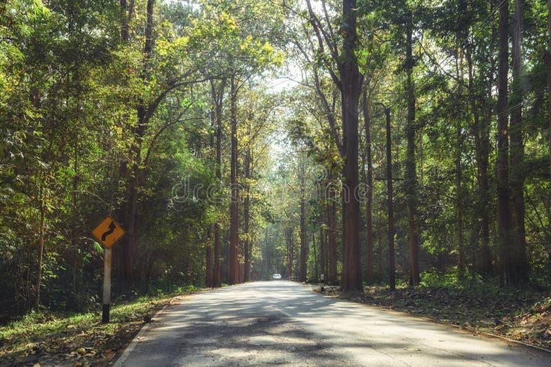 Floresta úmida tropical com luz solar na estrada asfaltada imagens de stock royalty free