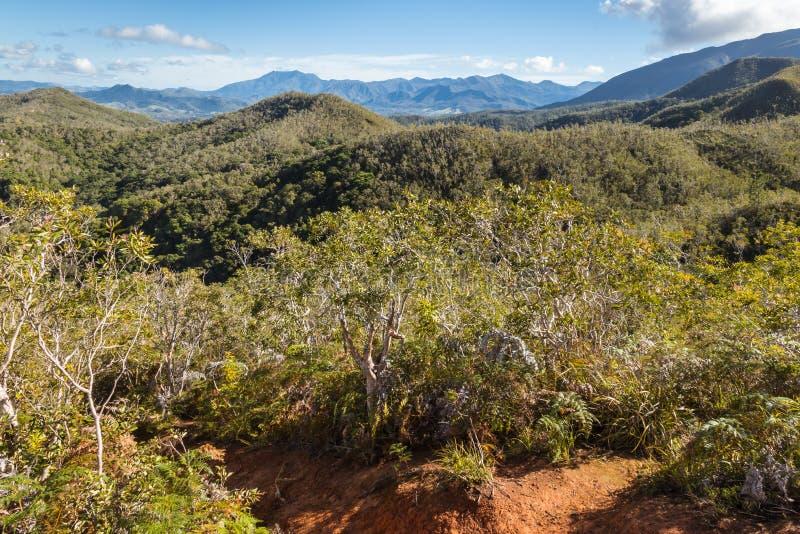 Floresta úmida tropical em cordilheiras em Terre grandioso, Nova Caledônia imagens de stock royalty free