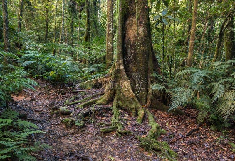 Floresta úmida tropical na paisagem de Nova Caledônia fotografia de stock