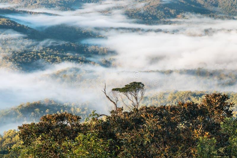 Floresta úmida tropical no parque nacional de Tamborine fotografia de stock