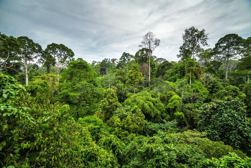 Floresta úmida tropical verde luxúria fotos de stock