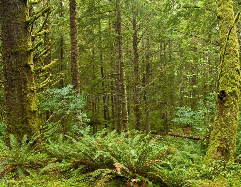 Floresta úmida verde fotos de stock