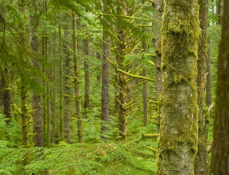Floresta úmida verde fotografia de stock royalty free