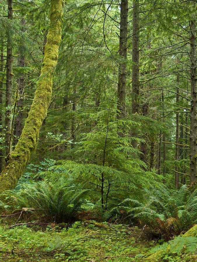 Floresta úmida verde fotografia de stock