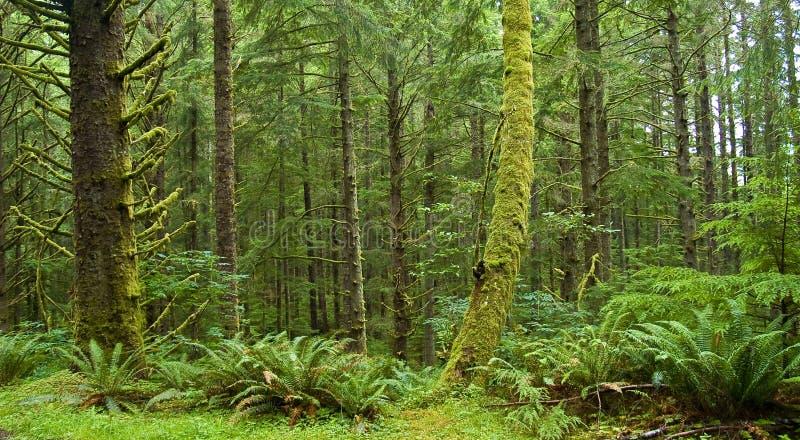 Floresta úmida verde foto de stock royalty free