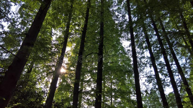A floresta imagem de stock