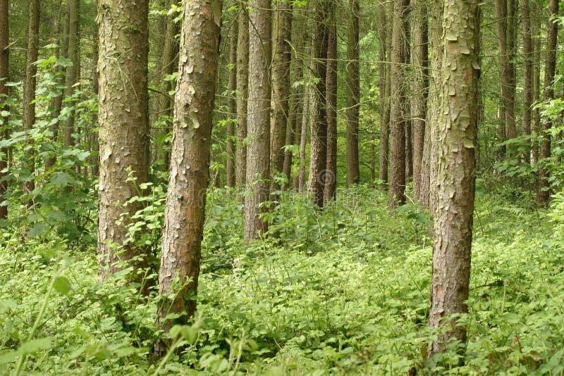 Download Floresta imagem de stock. Imagem de dossel, papel, ecology - 125519