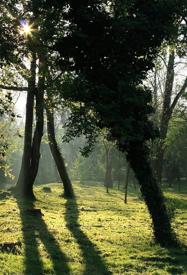 Download Floresta imagem de stock. Imagem de prado, mystical, greenery - 12800231