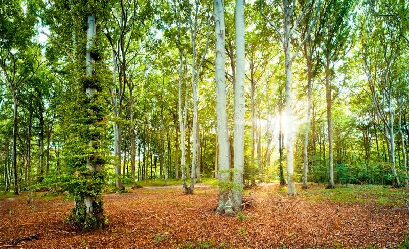 Floresta foto de stock royalty free