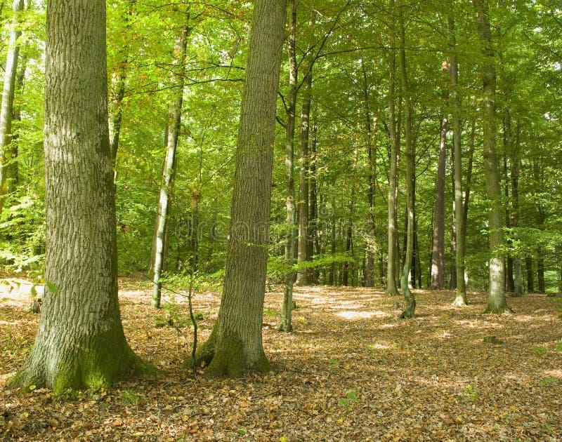 Floresta fotografia de stock
