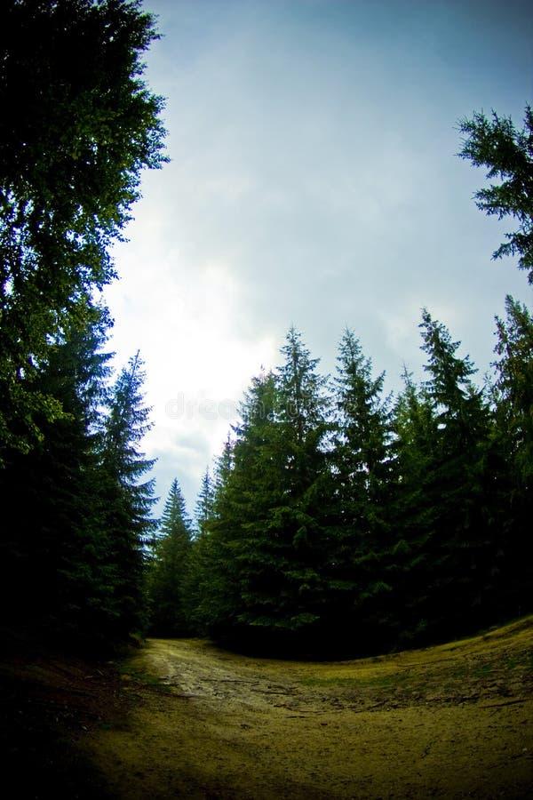 Floresta fotografia de stock royalty free