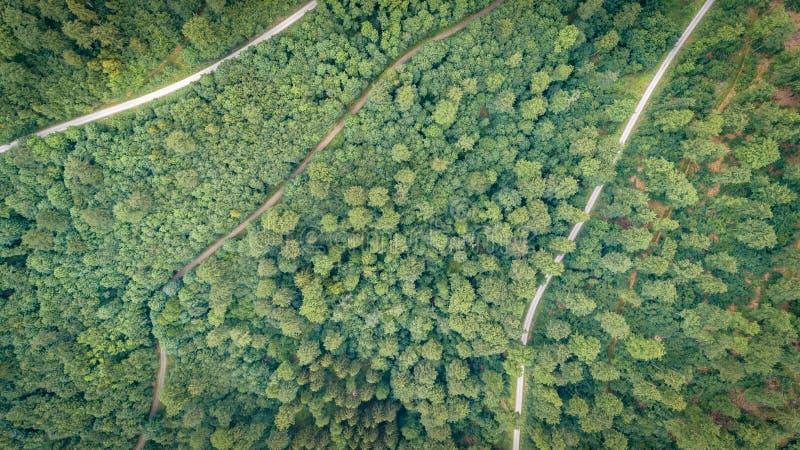 Floresta aérea da vista superior, textura da opinião da floresta de cima de imagem de stock