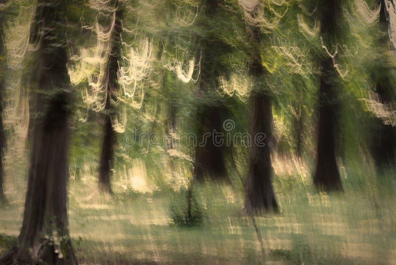 Floresta abstrata imagem de stock