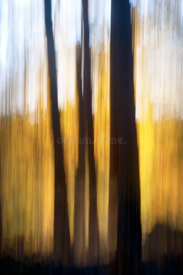 Floresta abstrata do outono imagens de stock