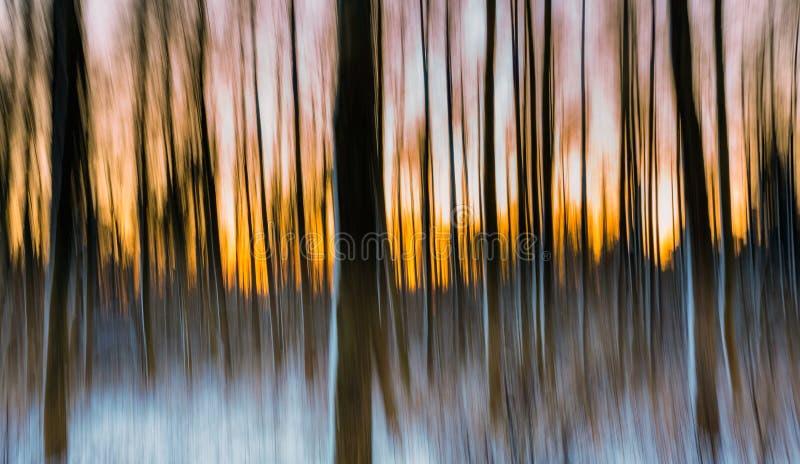 Floresta abstrata fotografada na exposição longa fotografia de stock