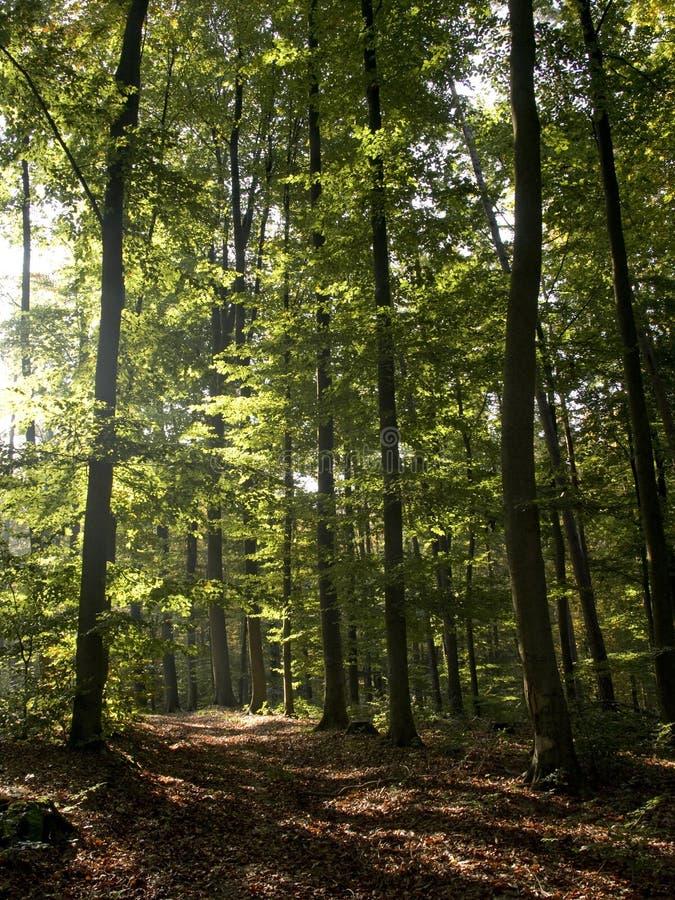 Floresta alemão fotos de stock