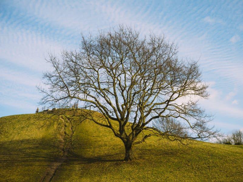 Floresta alemão com neve e árvores com atmosfera imóvel fotos de stock