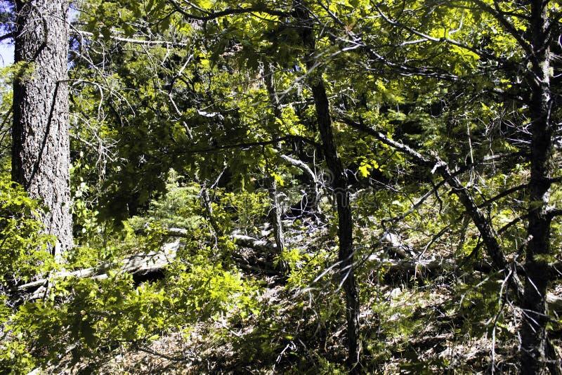Floresta amarela imagens de stock royalty free