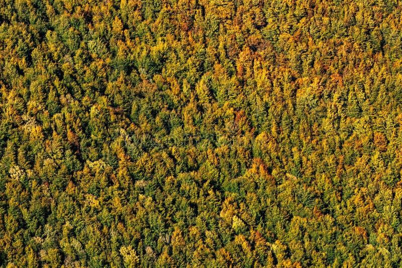 Floresta amarela, alaranjada e verde bonita do outono, muitas árvores nos montes alaranjados foto de stock royalty free