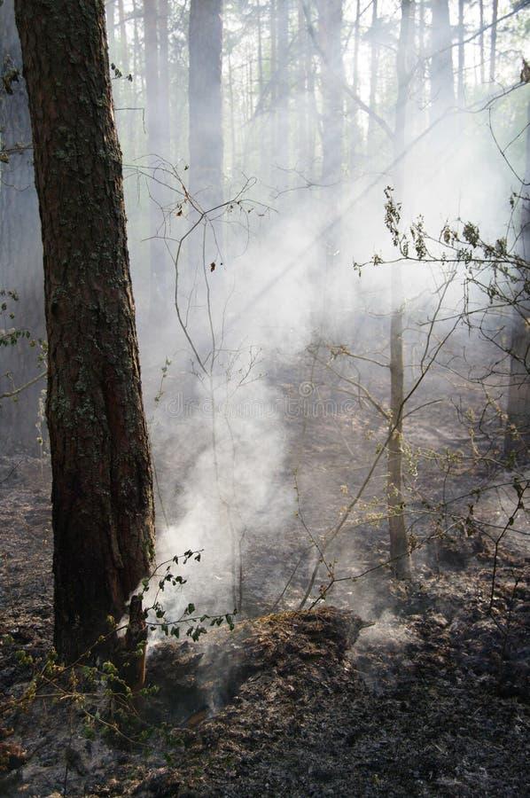 Floresta após o incêndio imagem de stock