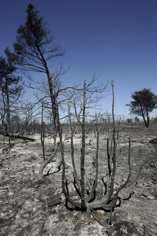 Floresta após o incêndio imagens de stock royalty free