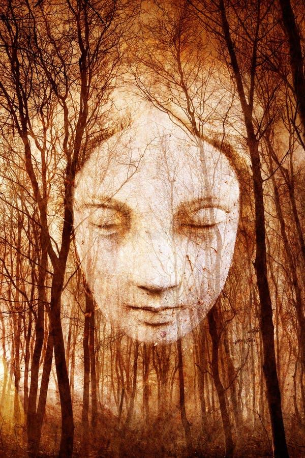 Floresta assombrada fotografia de stock