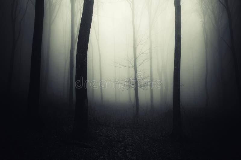 Download Floresta Assombrada De Dia Das Bruxas Na Noite Imagem de Stock - Imagem de assombrado, névoa: 99294155