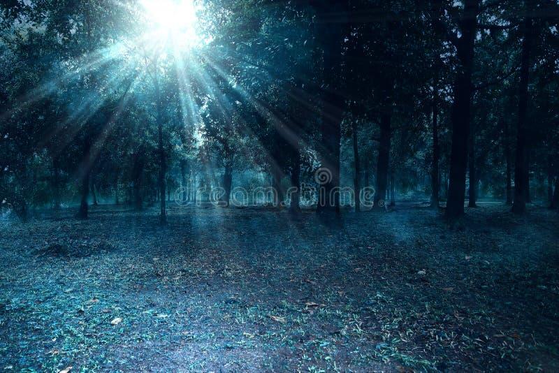 Floresta assombrada na noite com névoa fotografia de stock royalty free
