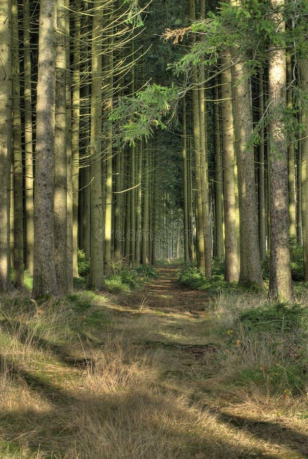 Floresta assustador imagem de stock