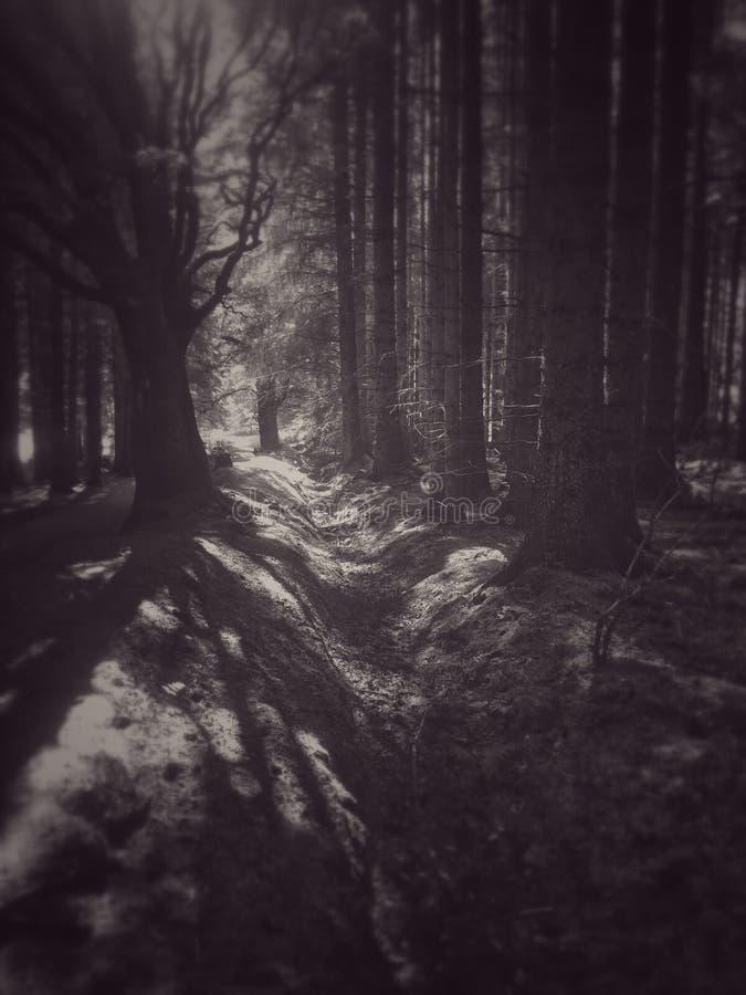 Floresta assustador fotos de stock royalty free