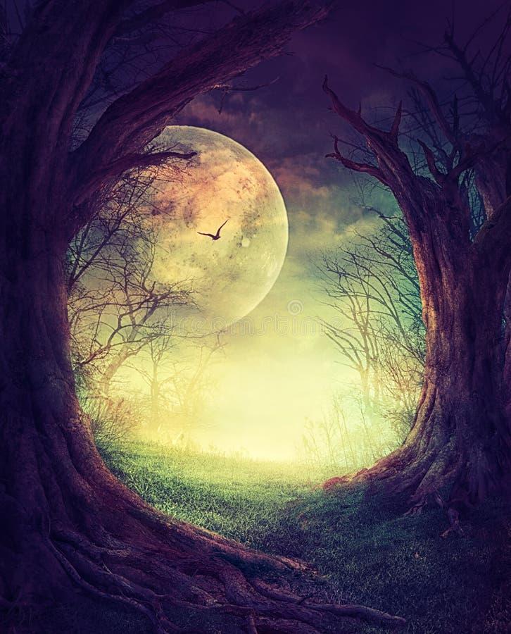 Floresta assustador de Dia das Bruxas ilustração royalty free