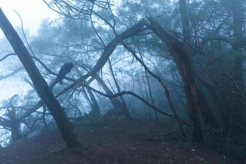 Floresta assustador enevoada na névoa foto de stock royalty free