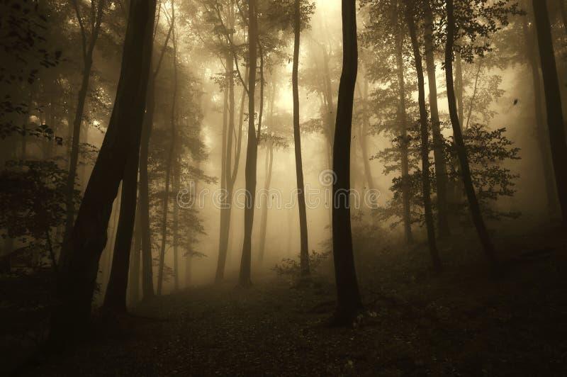 Floresta assustador na noite de Dia das Bruxas com névoa misteriosa fotografia de stock royalty free
