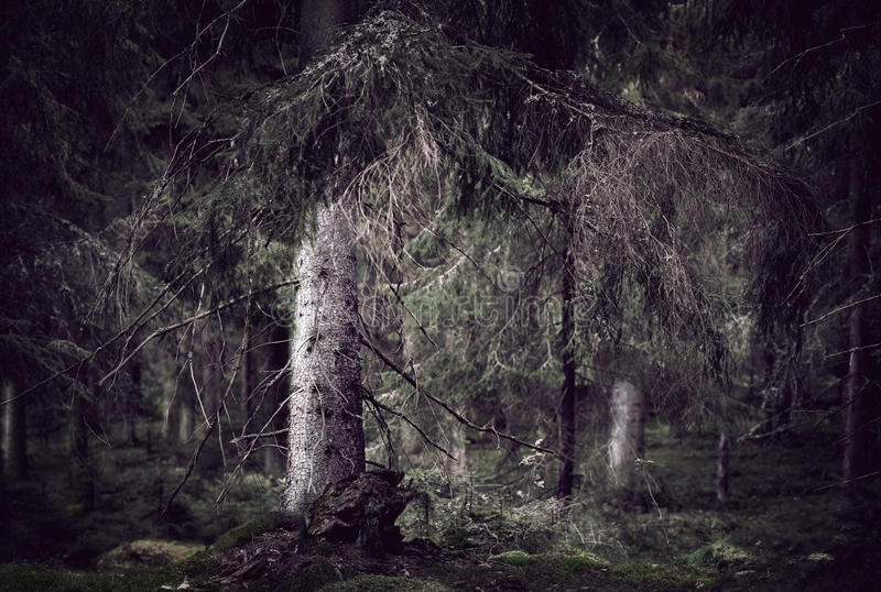 Download Floresta Assustador Selvagem Foto de Stock - Imagem de scary, tronco: 26504914