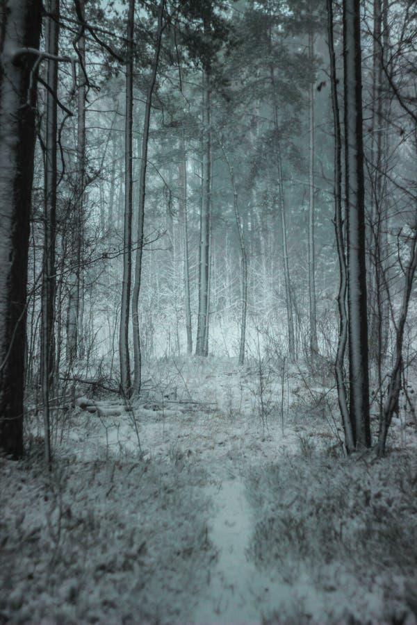 Floresta atmosférica, mágica do inverno do Natal completamente da neve branca fotografia de stock