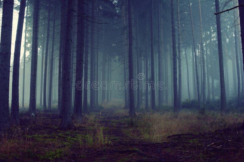 Floresta azul com névoa e luz fria imagem de stock royalty free