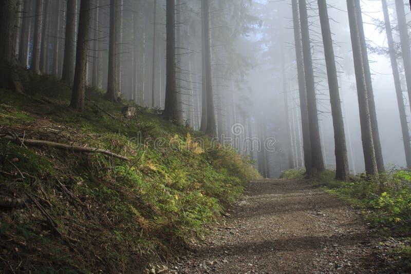 Floresta azul no outono fotografia de stock