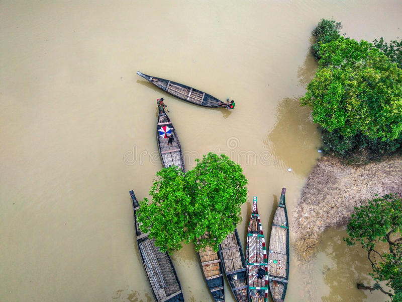 Floresta Bangladesh do pântano imagem de stock royalty free