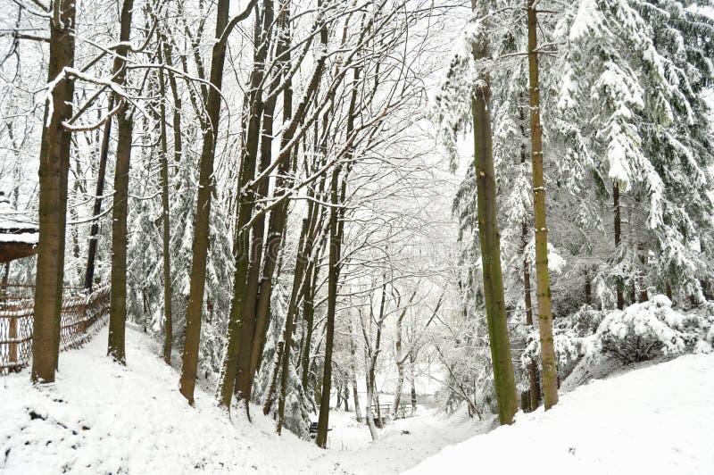Floresta bloqueado pela neve e lago congelado Shevchenkivskyi Hai Lviv Ukraine imagem de stock