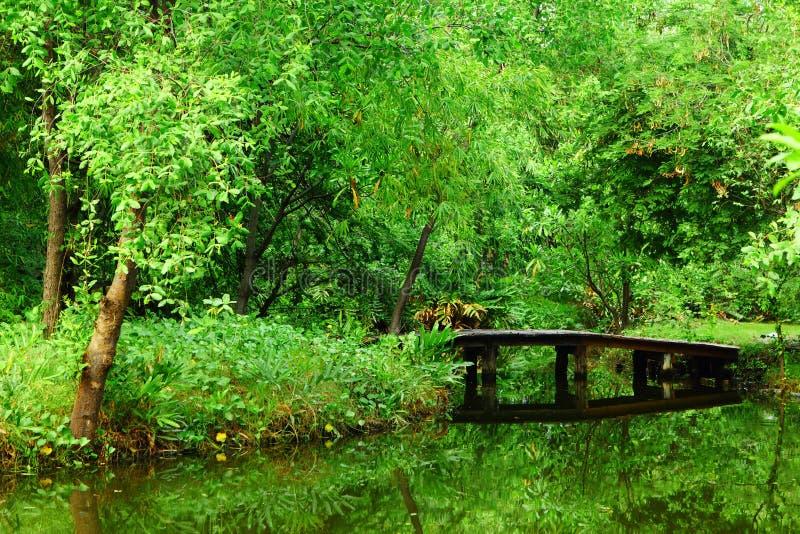 Floresta bonita foto de stock