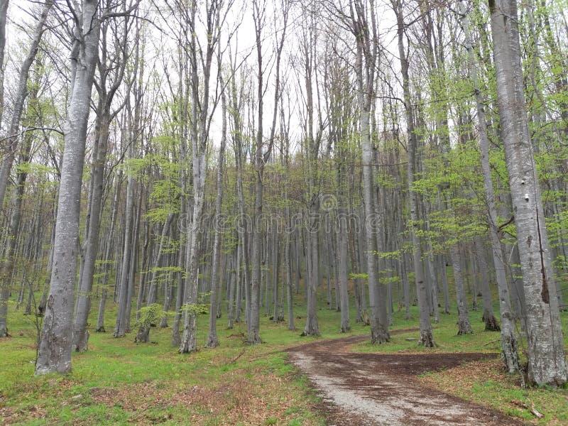 Floresta bonita imagem de stock