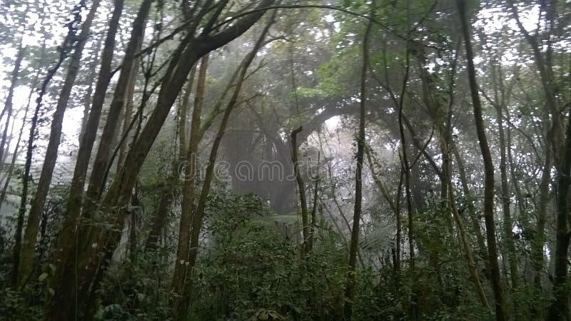 Floresta bonita acima na montanha foto de stock