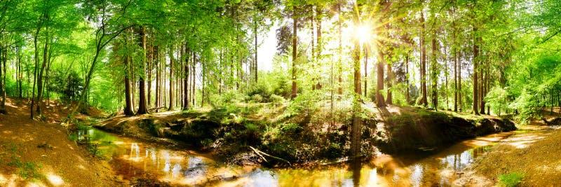 Floresta bonita com o ribeiro na luz do sol brilhante fotografia de stock