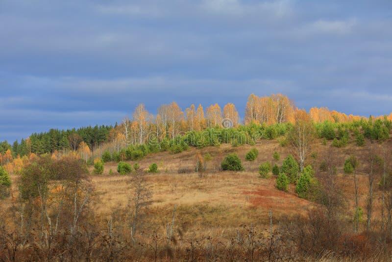 Floresta bonita do outono amarela e árvores verdes iluminadas pela luz solar fotos de stock royalty free