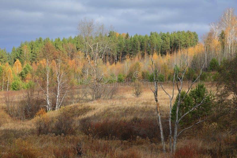 Floresta bonita do outono amarela e árvores verdes iluminadas pela luz solar foto de stock