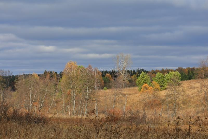 Floresta bonita do outono amarela e árvores verdes iluminadas pela luz solar foto de stock royalty free