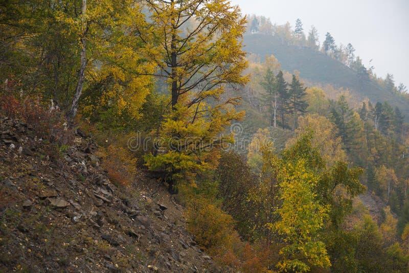 Floresta bonita do outono na pedra da montagem fotos de stock