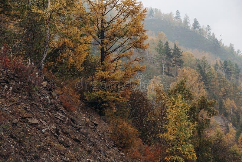 Floresta bonita do outono na pedra da montagem imagens de stock royalty free